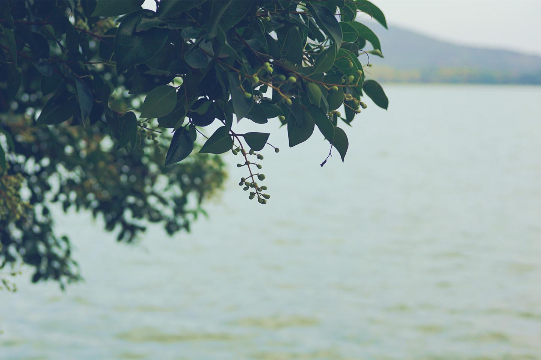 玄武湖, 南京
